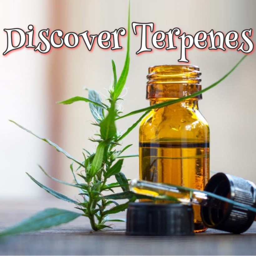 Discover Terpenes
