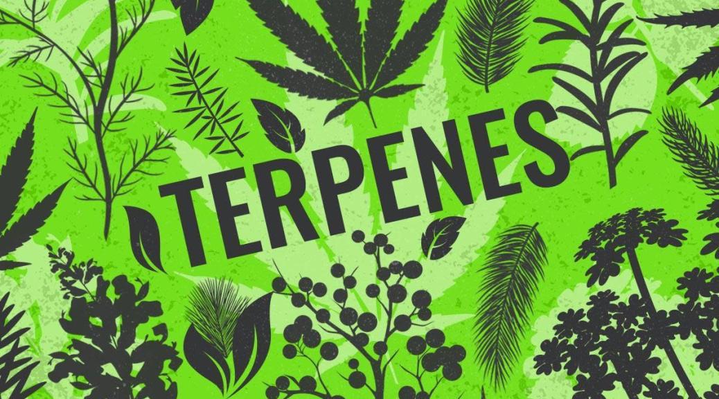 Terpene sources