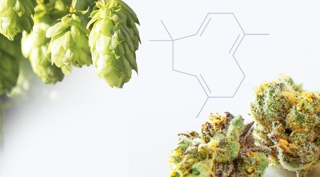 Hops, cannabis and humulene chemical structure