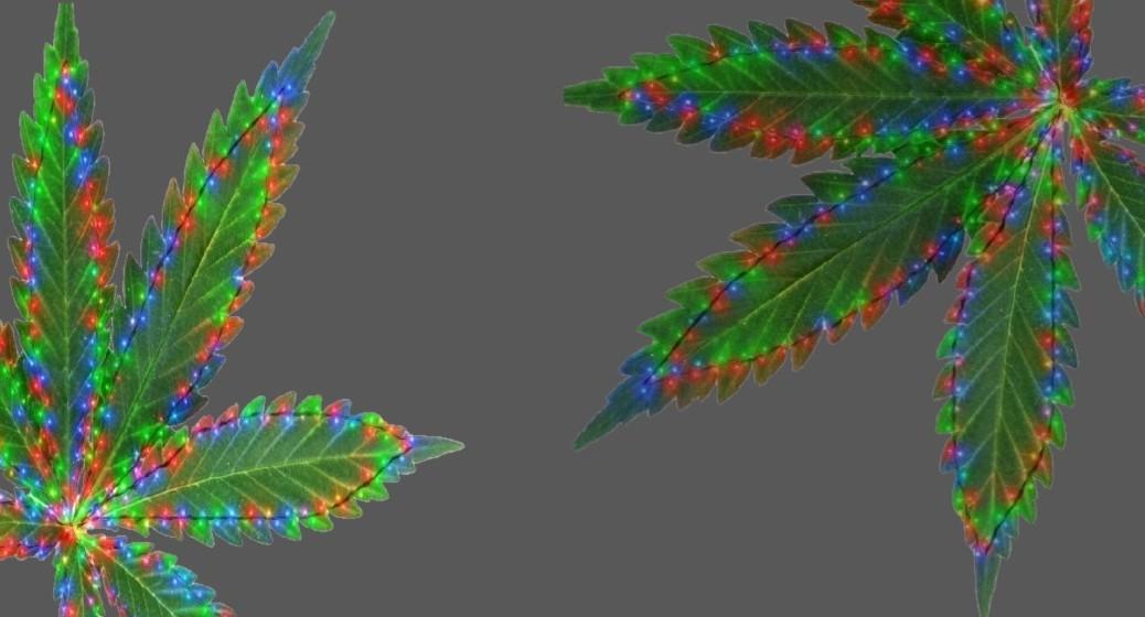 plant microscopy